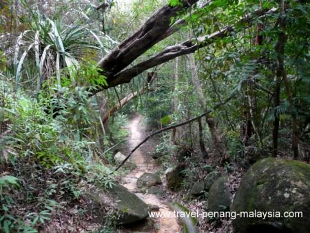 Penang National Park Photos