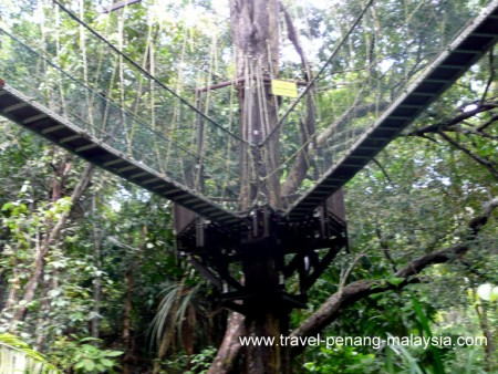Photo of the Canopy Walkway in Penang National Park