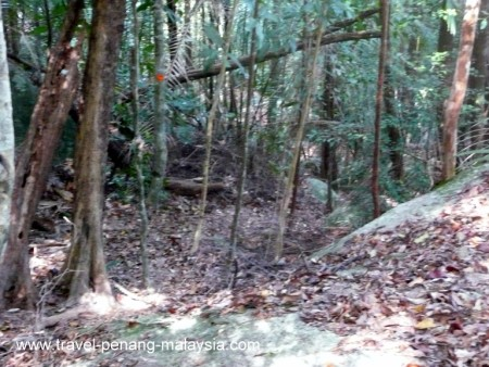 Photo of the Hiking Trail to Teluk Kampi Beach in Penang National Park
