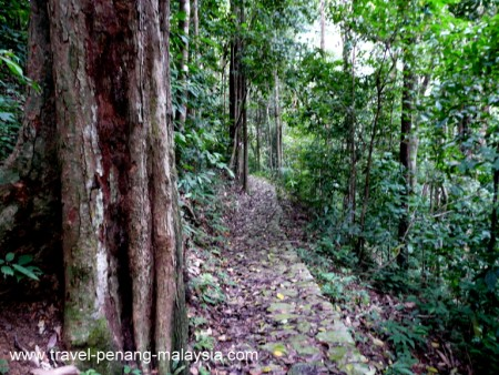 Photo of the jungle track in Penang Botanic Gardens