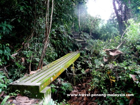 Jungle Trekking & Camping