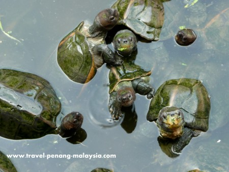 photo of the turtle pond in Kek Lok Si