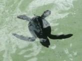 Go to Turtle Sanctuary