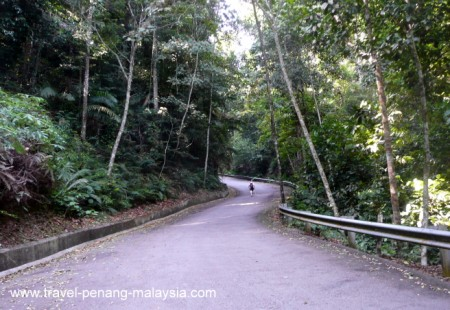 Walking Up Penang Hill