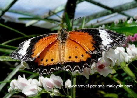 Butterfly Farm in Penang Malaysia
