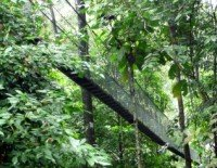Visit our Canopy Walkway Page