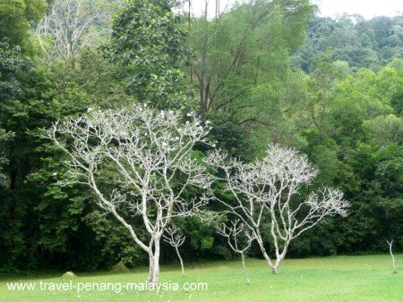 Photo of Ghost Trees