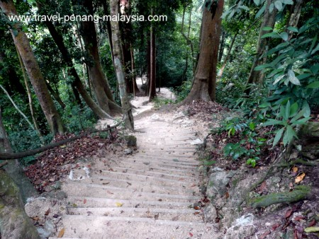 steep steps leading off of the Botanical Gardens