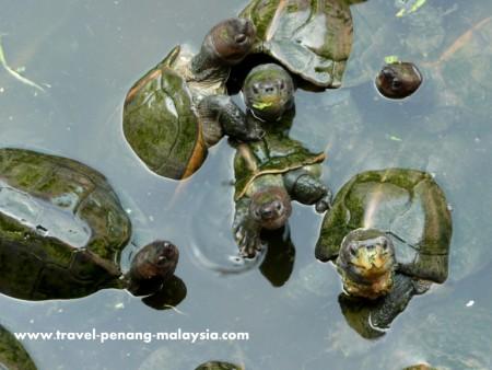 photo of the turtle pond in Kek Lok Si