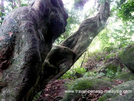 walk to Monkey beach Penang National Park